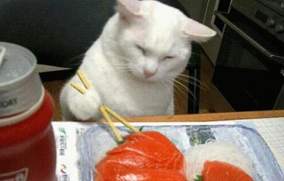 We cats can use chopsticks, too!