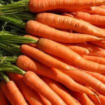 Not all carrots are orange