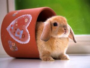 兔年春节精彩英文祝福