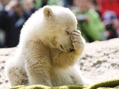"""明星北极熊""""克努特""""猝死曾与莱昂纳多同登耳朵卡通竖封面大象图片图片"""