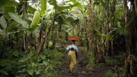 Project in DRC aims to increase fertilizer use