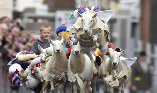 Annual sheep race in Scotland