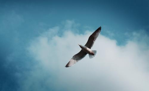 名著选读:飞鸟集