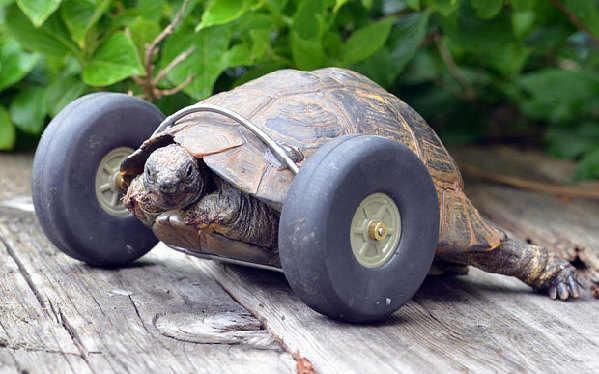 """乌龟装""""车轮腿"""" 再也不怕赛跑啦!"""