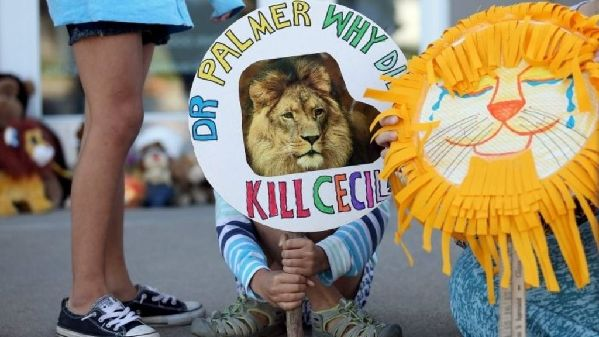 Americans' Anger Grows Over Killing of Lion
