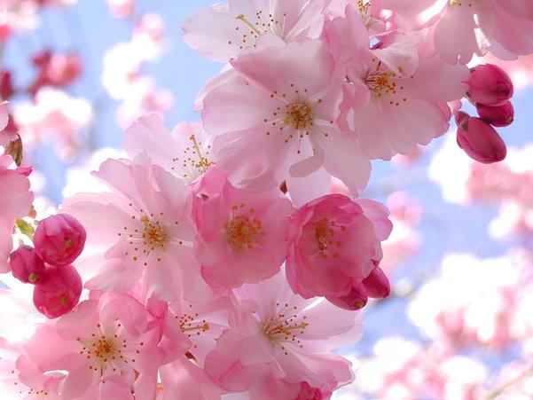 """心情如春天般美丽:10个""""快乐""""的英文表达"""