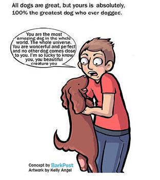 爱狗者和养狗者的7大区别