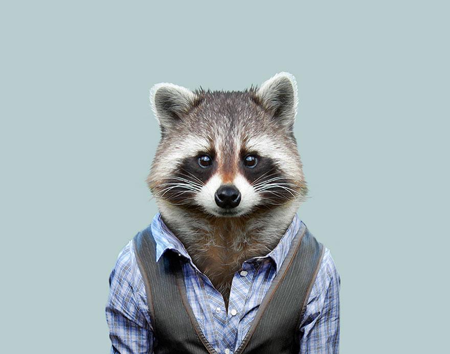 别臭美了 动物穿上衣服比你帅 组图