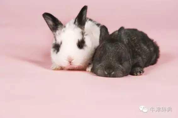 各种动物的孩子们用英文怎么称呼呢?