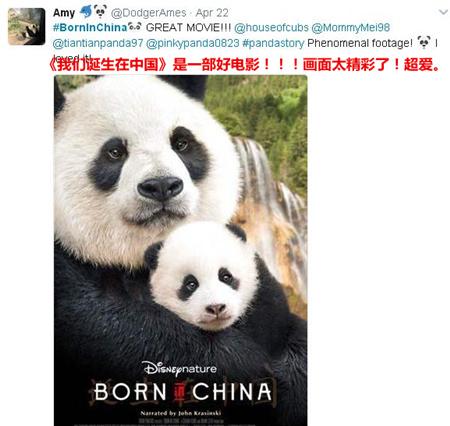 《我们诞生在中国》美国热映 大熊猫、金丝猴、雪豹海外圈粉