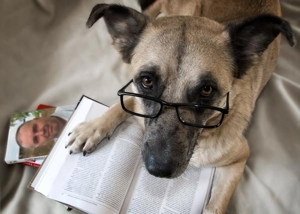 reading dogs 的图像结果