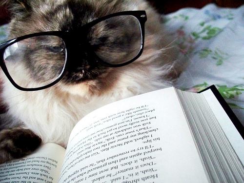 cat reading 的图像结果