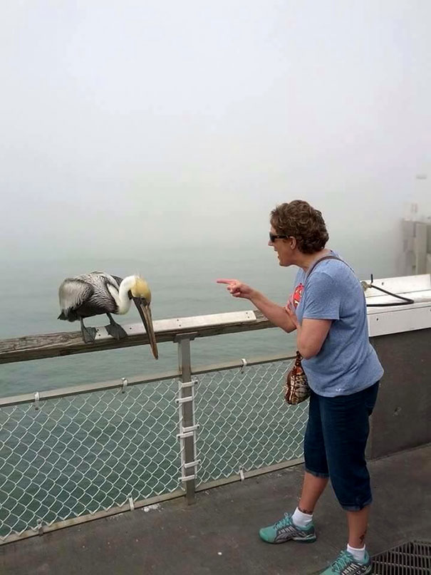 My Grandma Got Bit By A Pelican On The Pier And Then Began To Scold It