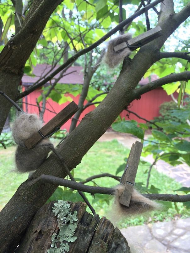 My Grandmother Pins Cat Hair To Trees So Birds Can Make Luxury Nests. So Damn Thoughtful