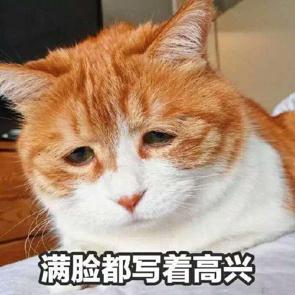 云养猫 的图像结果