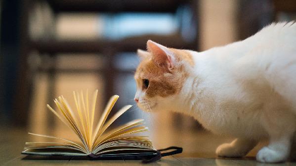 reading cat 的图像结果