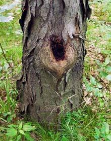 什么是树洞帖 tree hole post-英语点津